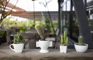 Close up cactus, coffee shop background.