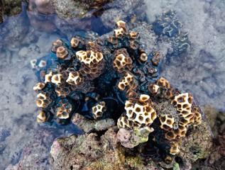 Coral at Koh Bulone, Panka Yai beach, Satun Thailand