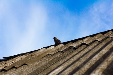 rural Galka sits on the roof of an old house under the blue sky