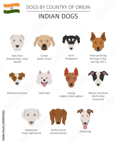 Dogs by country of origin  Indian dog breeds  Infographic template