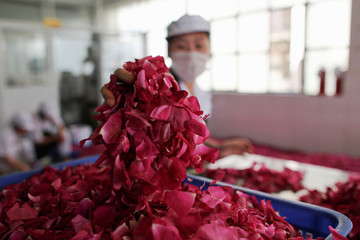 Worker sorts rose petals at a factory that makes flower pastries, in Kunmin