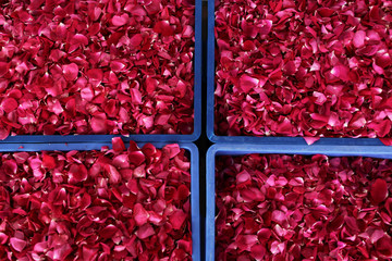 Rose petals in containers are seen at a factory that makes flower pastries, in Kunming