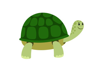 Green cute turtle cartoon icon