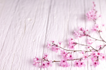 Flowered cherry branch, white wooden table. Slightly pink shades.