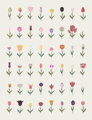 Tulip varieties flat icon set. Garden flower and house plants infographic