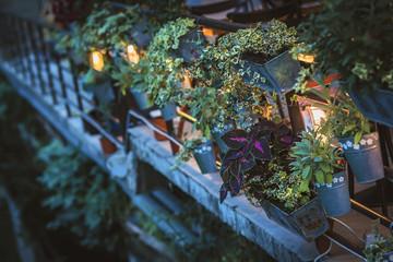 Plants in flowerpots on the terrace