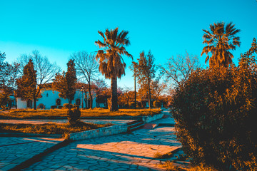 mediterranean park with some palms