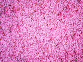 Pink sakura (japanese cherry) petals, natural abstract floral background