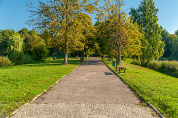 Fototapeta alejka w parku w Białowieży obraz