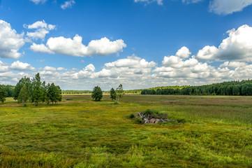 łąka w Białowieskim Parku Narodowym