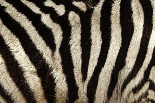 Zebra stripes for background