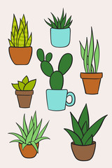Set vector of houseplants in pots. Hand drawn cartoon collection of house plants