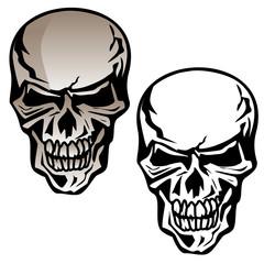 Human Skull Isolated Vector Illustration
