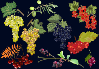 branches with different berries isolated on black