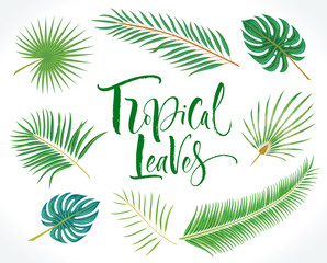 Set of vector tropical palm leaves isolated on white background. Vector illustration