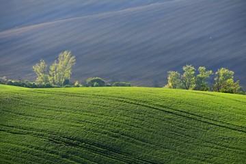 Moravian Tuscany – beautiful spring landscape in south Moravia near Kyjov town. Czech Republic - Europe.