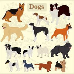 Set of dogs of different breeds on a light background