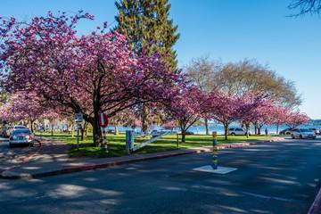 Seward Park Blossoms 4