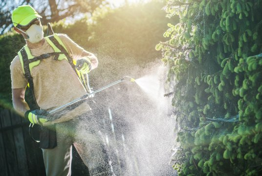 Pesticide Plants Spraying
