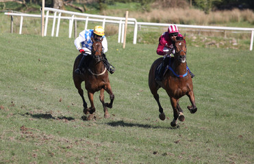 galloping race horses and jockeys sprinting towards the finish line