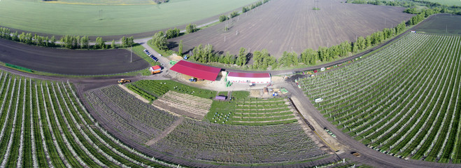 Apple-tree garden from the air.