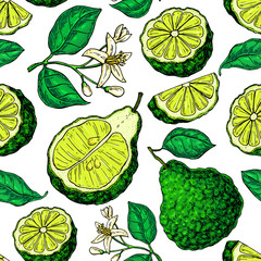 Bergamot vector seamless pattern drawing.