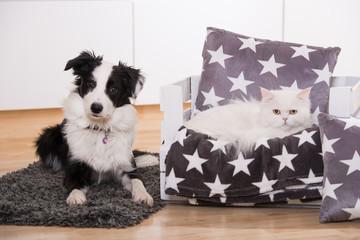 Hund und Katze im Wohnzimmer
