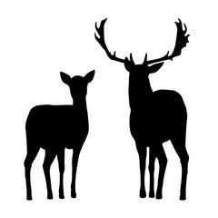 Vector silhouettes of deer and hind, isolated