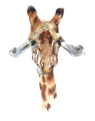 Giraffe head portrait safari animal African wildlife endangerous specie watercolor painting illustration isolated on white background