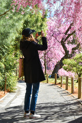 Woman taking photos of chery blossom