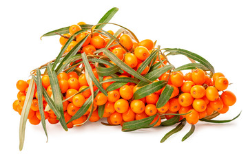 heap of beautiful abundance big branch sea buckthorn berries with leaves is isolated on white background