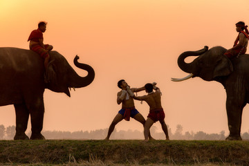 Silhouette fighter tradition Thai boxing or Muay-Thai outdoor battle with mahout and elephants, Ancient fighter on the world sport of Thai and around.