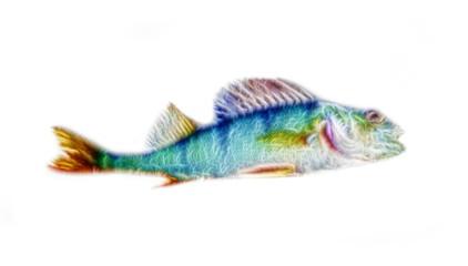 River perch illustration