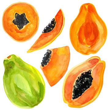 Watercolor illustration of papaya fruit set isolated on white background