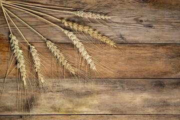 Wheat head on wooden floor