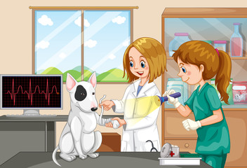 Veterinarian Doctor and Nurse Helping a Dog