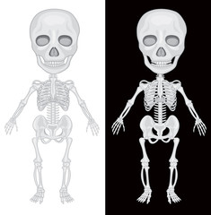 Skeleton on Black and White Background