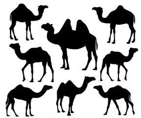 camel silhouette vector icon logo design set