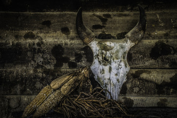 Buffalo skull and Dry plants on old wood background.