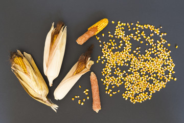 Dry golden corn cobs and seeds arranged on black background
