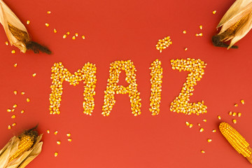 Concept of the word corn in spanish language formed with dry corn seeds on red background and decorated with golden corn cobs and dry corn seeds