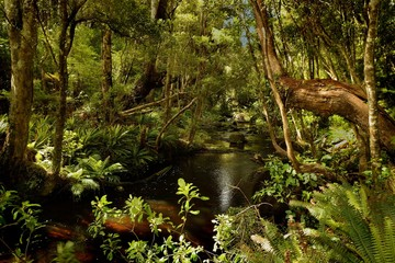 Landscape New Zealand - primeval green forest in New Zealand