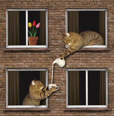 The cat is pouring a cup of milk to his neighbor.
