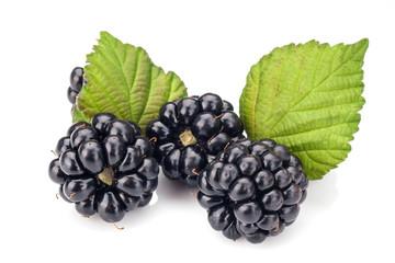Blackberries on white