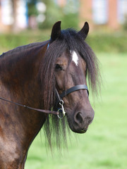 Horse In Bridle Headshot