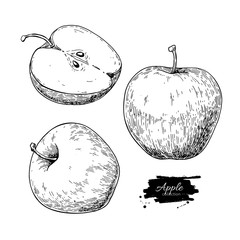 Apple vector drawing. Hand drawn fruit and sliced pieces. Summer