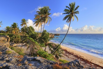 Bottom Bay, sandy beach with palm trees on the Atlantic Ocean, Barbados, Lesser Antilles, Caribbean, West Indies, Central America