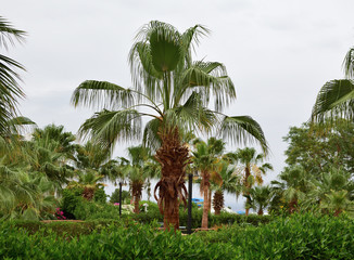 green palm trees grove. tropical green landscape. resort concept.