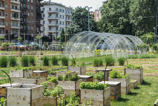 Urban farming sustainability concept, captured in Milan, Lombardy, Italy.