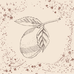 Retro style. Hand drawn sketch with lemon on sepia vintage background. Vector illustration